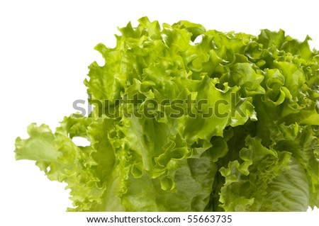 Lettuce bunch extreme closeup macro shot background