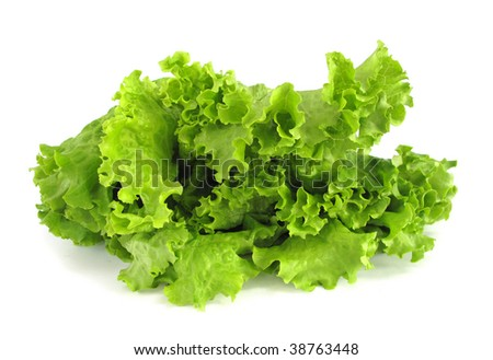 lettuce crisp - stock photo