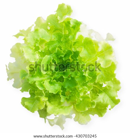 Lettuce green salad isolated on white background