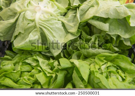 lettuce in a grocery store close-up - stock photo