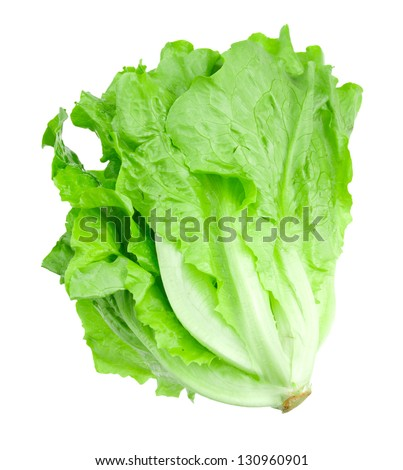 Lettuce isolated on a white background - stock photo