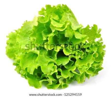 Lettuce isolated on white background - stock photo