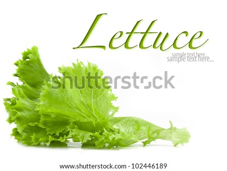 Lettuce isolated on white background (with sample text) - stock photo