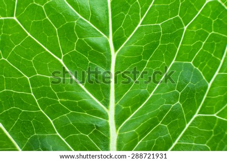 lettuce juicy close-up. fresh lettuce leaves, macro zoom, a large photo, a large amount of background - stock photo