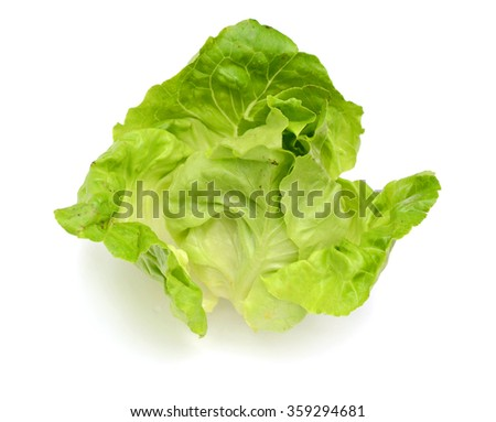 lettuce leaf closeup view isolated on white background