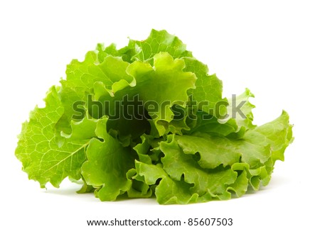Savoy Cabbage Leaf Texture Macro Background 163457510 on Chopped Lettuce Green Clip Art