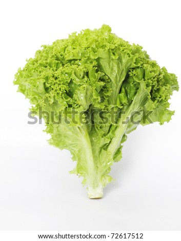 Lettuce on a white background - stock photo