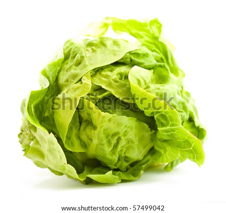 lettuce on white background - stock photo