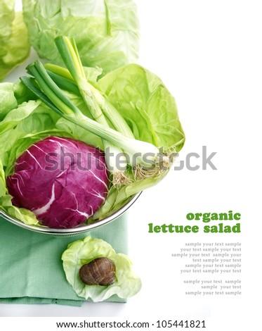 Lettuce salad - stock photo