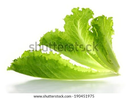 Lettuce salad isolated on a white background  - stock photo