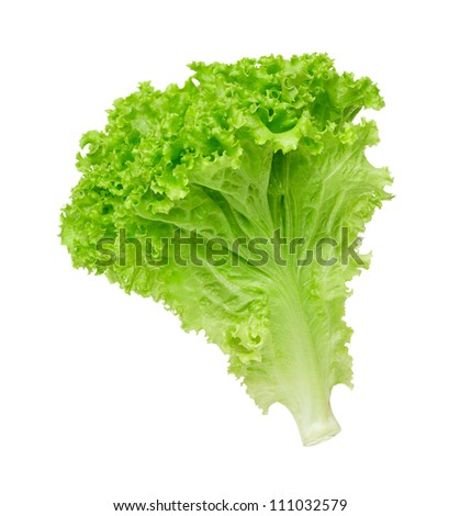 lettuce salad on a white background - stock photo