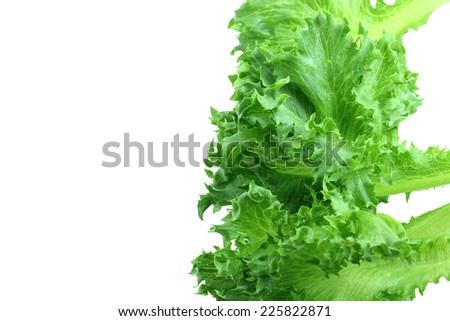 lettuce salad on white background.