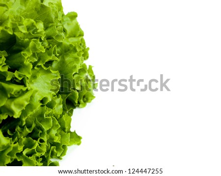 Lettuce shot on a white surface with room for copy.