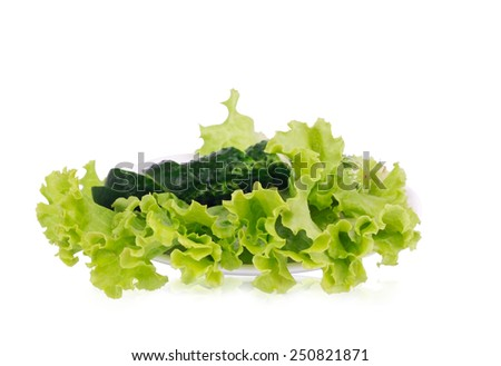 Lettuce with sliced cucumber lying on the white plate - stock photo