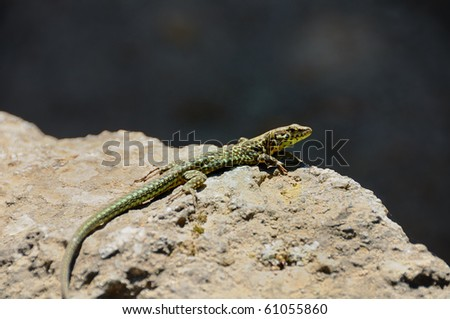 lezard stock images royaltyfree images amp vectors