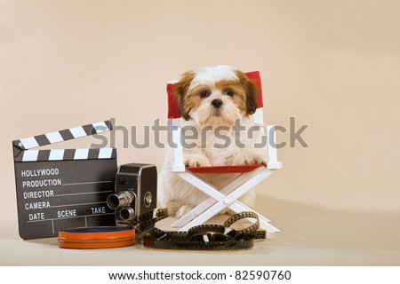 Lhasa Apso puppy with director chair clapboard movie reel - stock photo