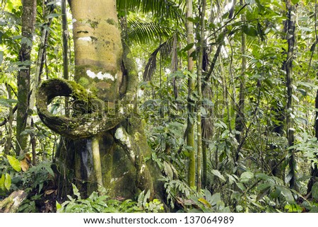 Liana on a tree trunk in the rainforest, Ecuador - stock photo