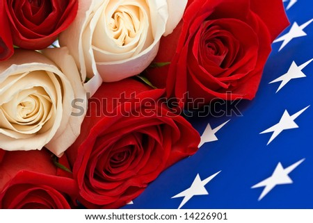 Liberty Rose - stock photo