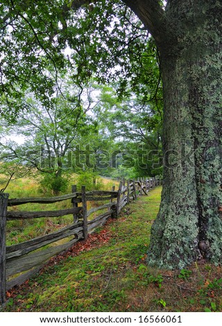 Lichen covered tree and fence