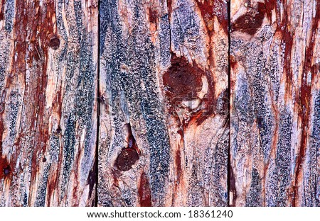 Lichen on a old wooden wall - stock photo