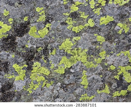 lichens as background - stock photo