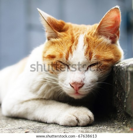 lie cat - stock photo