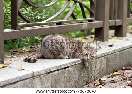 Lie cat - stock photo