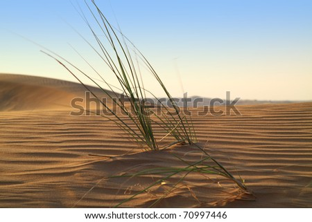 Life beginning in the desert - stock photo