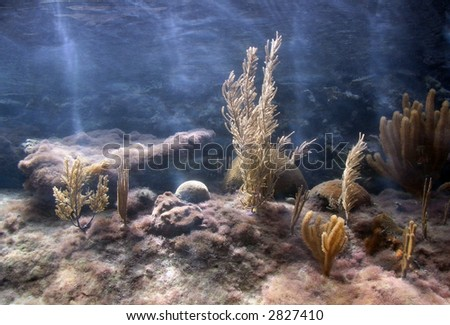 Life coral reef tank - stock photo