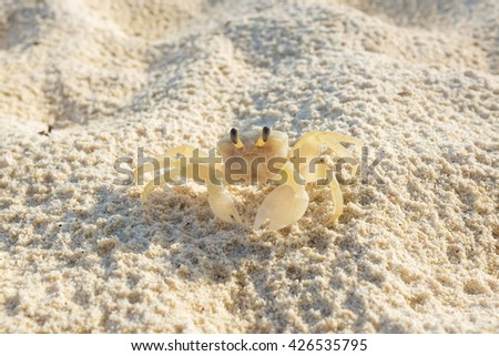 Life crab walking on the sand. - stock photo