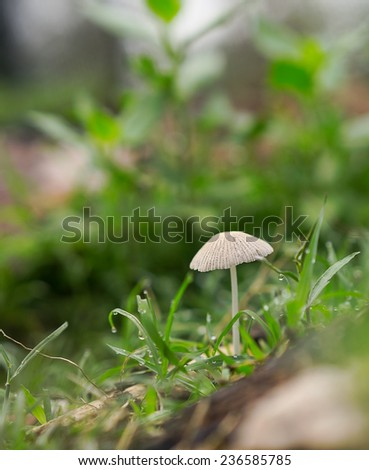 Life emerges after spring rain with green grass, mushroom fungi and raindrops - stock photo