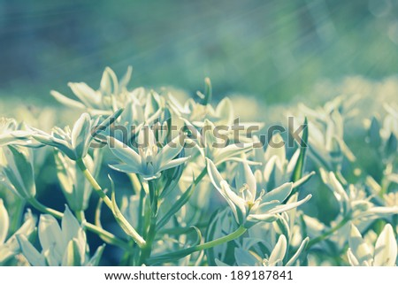 Life-giving sunlight. Vintage floral background.Tone correction using filters. - stock photo