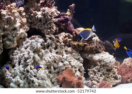 life in aquarium - stock photo