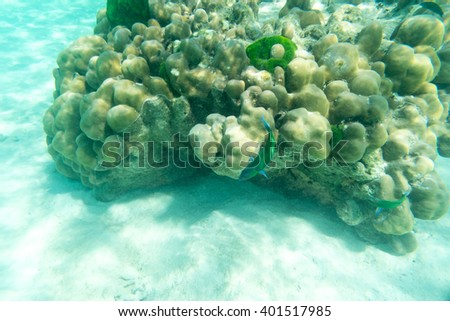 life of green fish and hard coral underwater sea and sand - stock photo