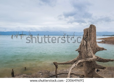 Lifeless shore of the beautiful Dead sea with the dead bushes - stock photo