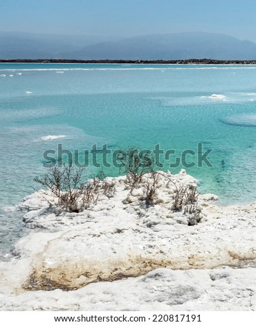 Lifeless shore of the beautiful Dead sea with the dead bushes - Israel - stock photo