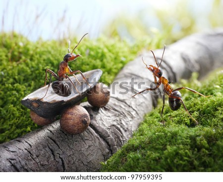 lift, handsome! hitch-hiking, ant stories - stock photo