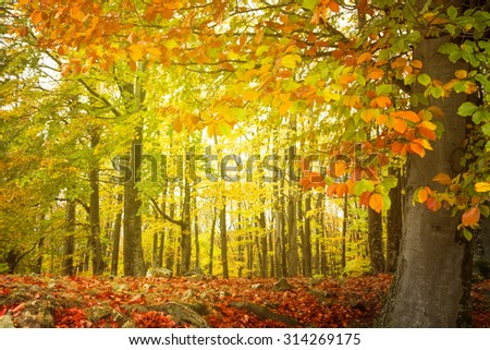 Light and beautiful colors in autumn forest - stock photo