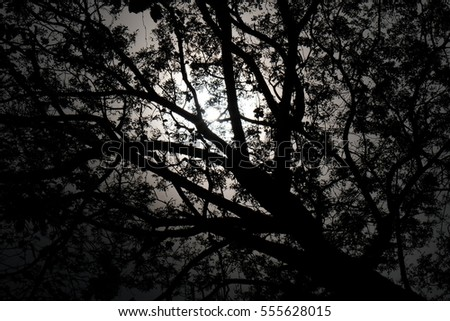 light and shadow with giant tree