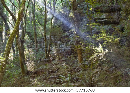 Light beam in a forest. Sacred road to santiago. Sarria. Lugo