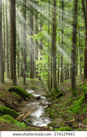 light beam over the stream in the natural park - stock photo
