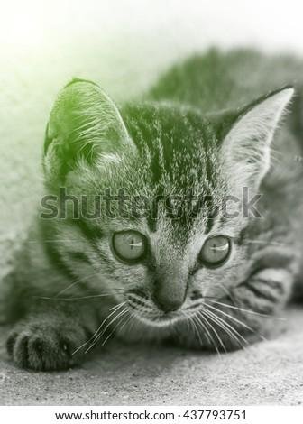 Light beautiful kitten - stock photo