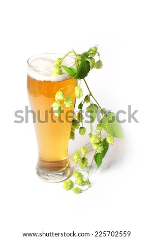 light beer in the glass and plant hop