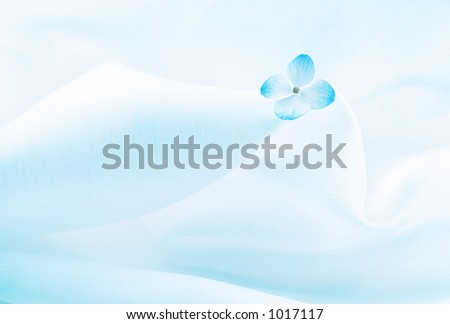 Light blue background with flower - stock photo