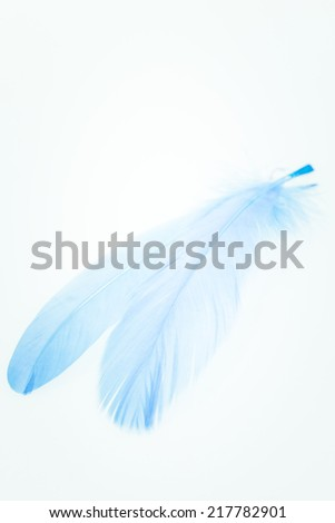 Light blue feathers close up - stock photo