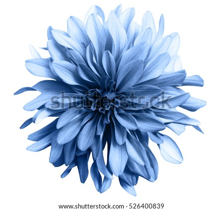 flower stock images, royaltyfree images  vectors  shutterstock, Beautiful flower