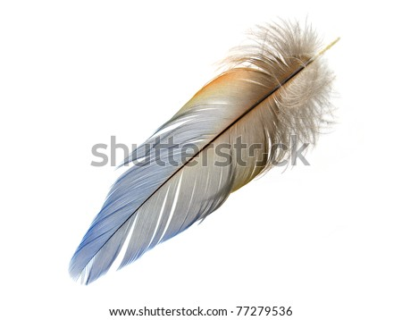 Light Blue Macaw feather isolated - stock photo