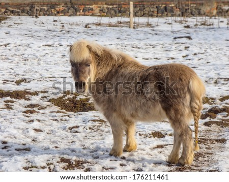 Light brown pony - stock photo