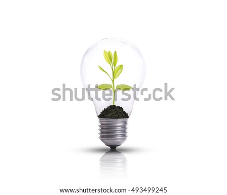 light bulb against tree isolated on white background. Ecological and energy concept