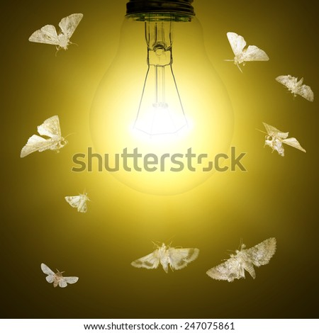 Light bulb and moths flying around - stock photo